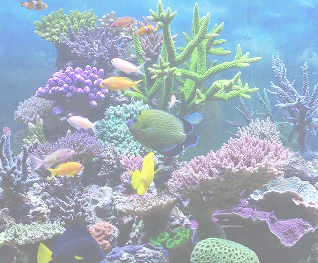 Bulk Reef Supply background